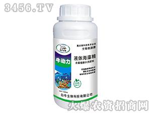 液体海藻精-牛动力-白牛生物