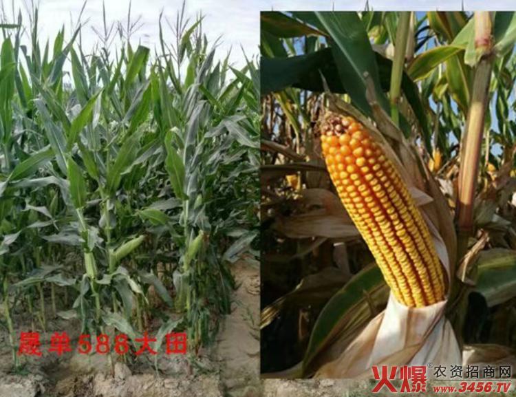 郑州喜得粮农业科技有限公司