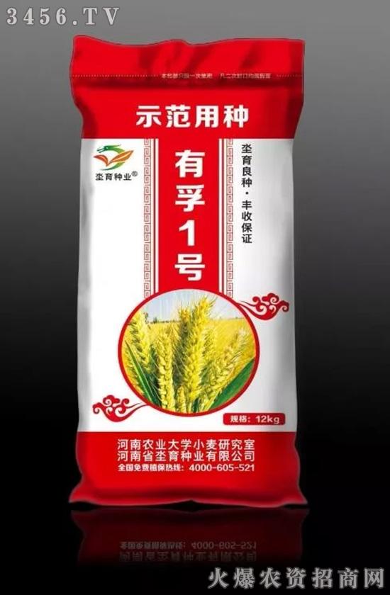 小麦种咋选?冬性、半冬性、春性小麦是咋回事?