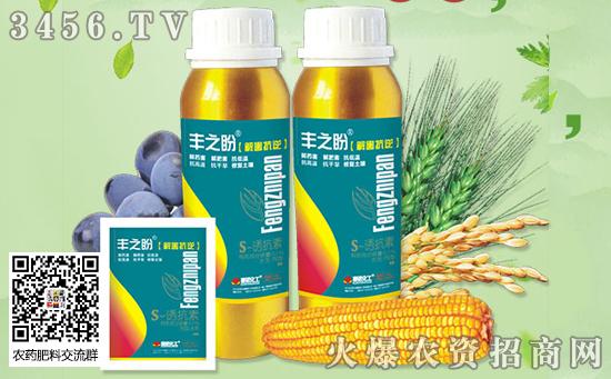 玉米企业提价收粮,年后会不会大涨?各地玉米价格是多少?