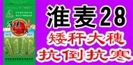 河南省金粮源种业发展有限公司