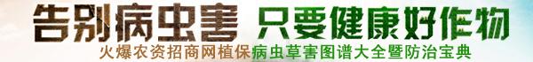 火爆農資招商網【3456.TV】病蟲草害圖譜欄目收錄了大量作物病蟲草害相關圖片信息及病蟲草害防治技術