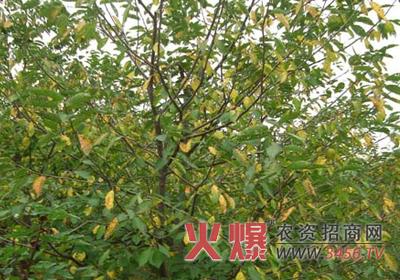 化学防治果树病虫害的具体措施