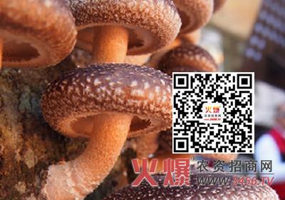 香菇毛霉的危害及防治方法是什么?