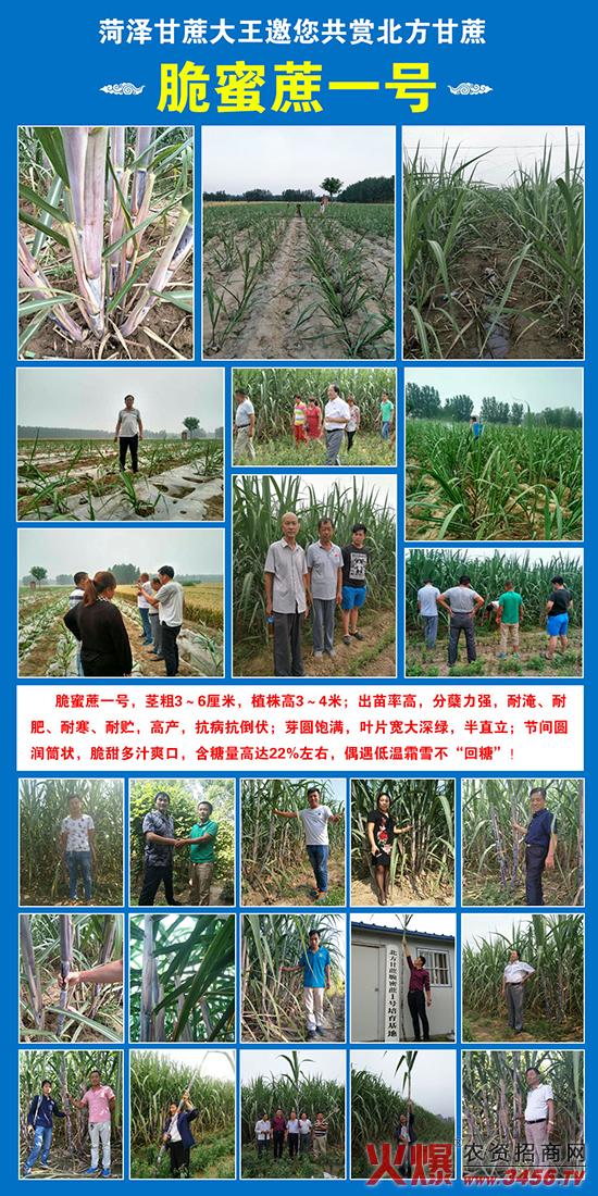 郓城兴旺农资有限公司