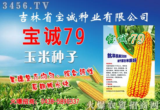 【宝诚79】宝诚79玉米种子怎么样?