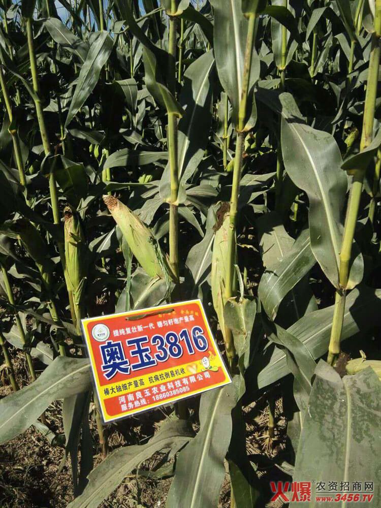 河南良玉农业科技有限公司