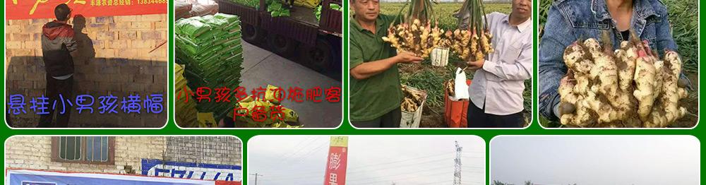波尔森(河南)农业科技有限公司