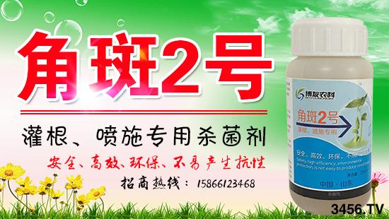 灌根喷施专用杀菌剂-角斑2号-博友农业