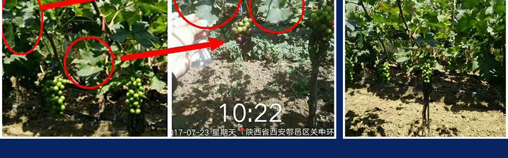 青岛普创化肥有限公司