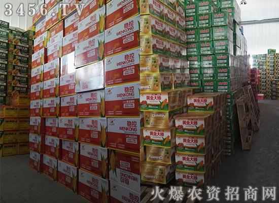 科学使用玉米控旺剂,玉米想不增产都不行!