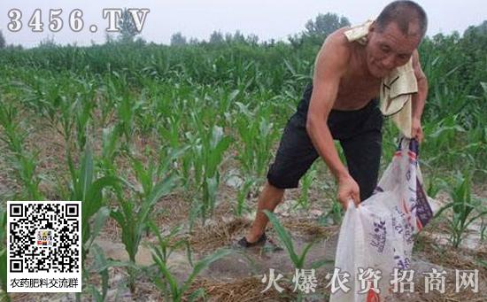 玉米什么时候追肥,玉米追肥用什么肥好
