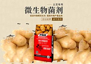 种植土豆采用盖膜种植有哪些好处 盖膜怎么种植