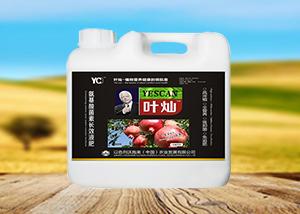 石榴种植方法 施肥方法 坐果期需要注意哪些问题