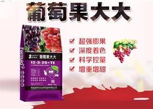温室大棚葡萄挂果后如何管理 葡萄膨果期管理方法