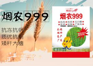 小麦种子怎么种 种植方法 小麦种子怎么发芽