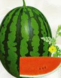 西瓜种子图片