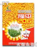隆平206玉米种图片