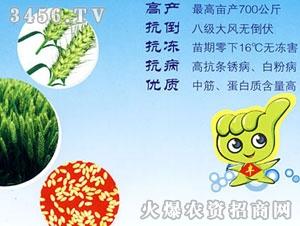 联丰-百农矮抗58