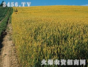 联丰-百农160
