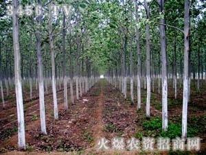 山东泉林生态科技有限责任公司