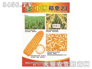中博郑单23