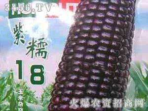 紫糯18糯玉米种子