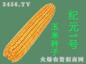 纪元1号玉米种子