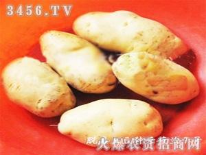 奇山脱毒土豆种子