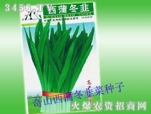 奇山西蒲冬韭菜种子