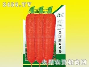美国新五寸参胡萝卜种子