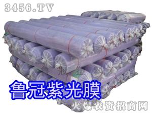 鲁冠紫光膜