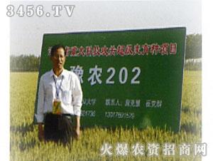豫农202