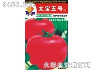 太宝五号(极早熟粉红果)——番茄种子