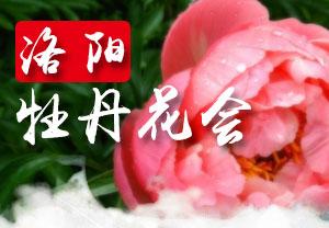 2021洛阳牡丹花会-2021年第39届洛阳牡丹文化节