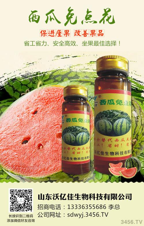 如何鉴别西瓜种子 西瓜种子农药消毒处理小技巧