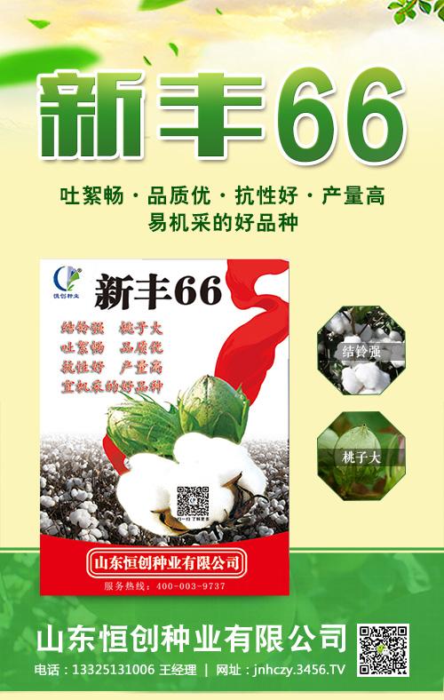 如何选购好的棉花种子?新丰66棉花种子怎么样?