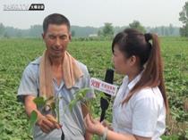 走进河南德立泰襄县脱毒红薯的实验基地