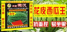 河南省杜庄主种业科技有限公司