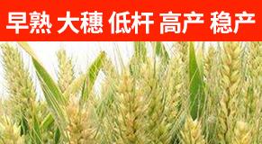 河南丰硕种业有限公司