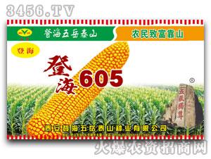 五岳泰山-登海605玉米种子