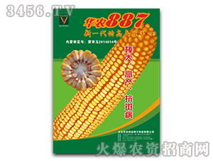 华农887最新国审玉米种子