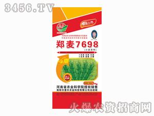 惠农-郑麦7698