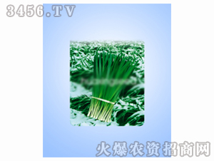 中泰雪韭王-韭菜种子