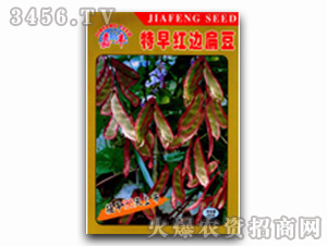 扁豆种子-泰国红边扁豆