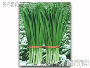 韭菜种子-平顶宽叶雪韭