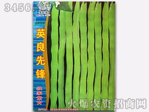英良先锋-芸豆种子