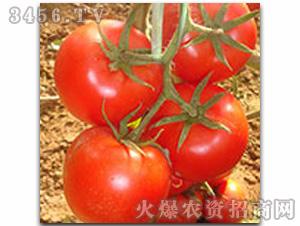 宝丽-西红柿种子