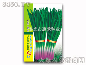 韭菜种子-汉中韭王