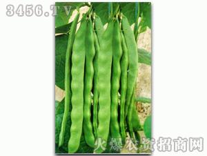 绿剑龙-芸豆种子
